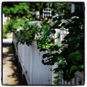 fence covered / Photo by Amy Watson Smith