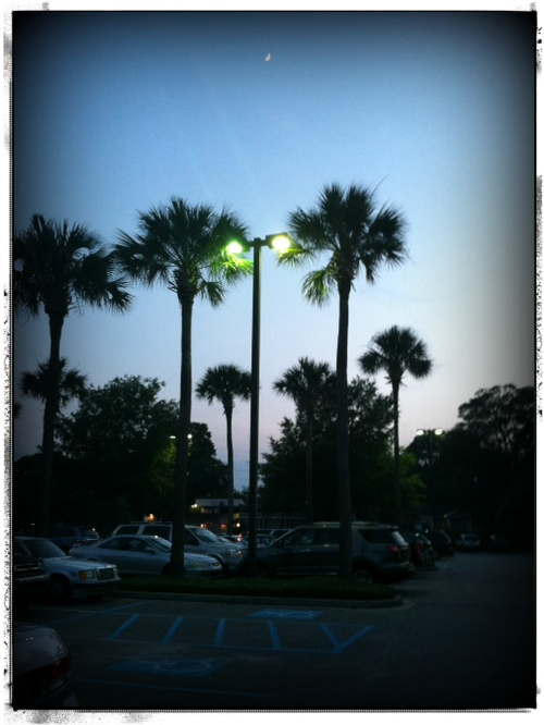 Palmetto moon in parking lot / Photo by Amy Watson Smith, 2013