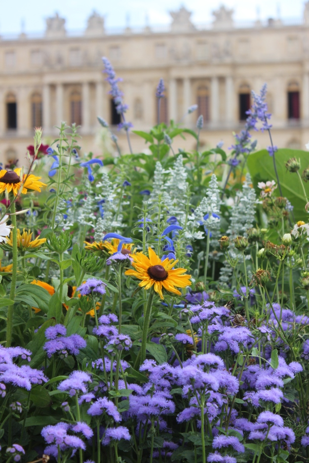 Versailles flowers (Photo by Amy Watson Smith, July 2013)